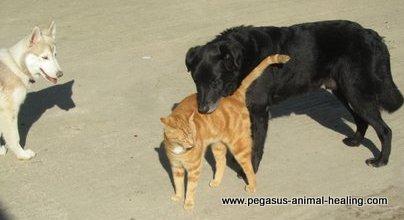 Animal Feelings- An Introduction