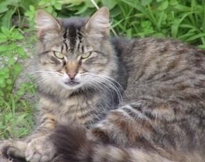 Antipodean Cats