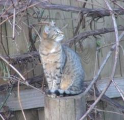 Chrisitne2cats15