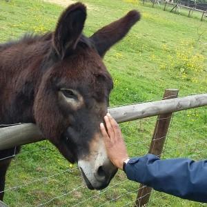 2016-06-06 donkey2