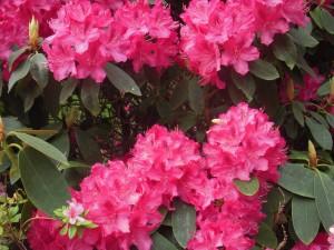 flowersred&pink
